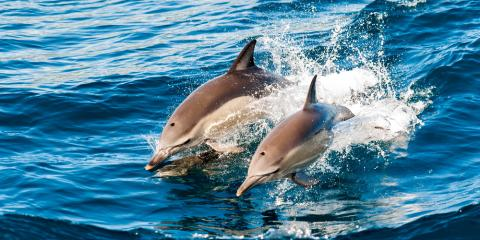 3 Species You Could Spot on a Hawaii Dolphin Excursion, Waianae, Hawaii