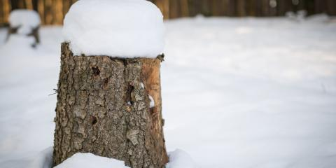 Why Tree Stump Removal Is Crucial During Winter, Newburgh, New York