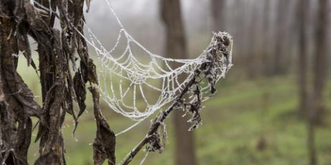 What Happens to Spiders During the Winter?, St. Louis, Missouri
