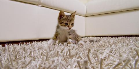 3 Pet Messes That Require Residential Carpet Cleaning, Rochester, New York