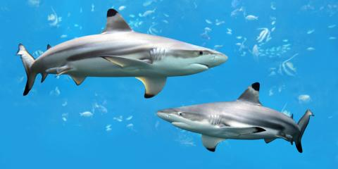 Diving Equipment Experts Debunk Shark Myths, Kettering, Ohio