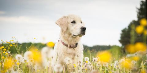 How Do Dogs Get Fleas?, Dothan, Alabama