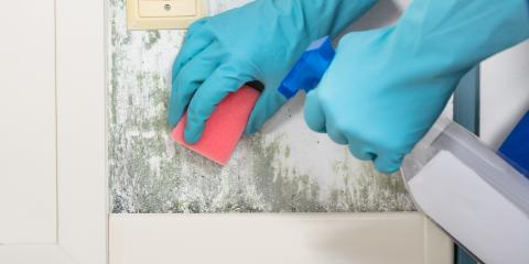 5 Questions to Ask a Mold Removal Specialist, Omaha, Nebraska