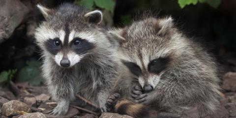 3 Animal Control Tips for This Fall, New Milford, Connecticut