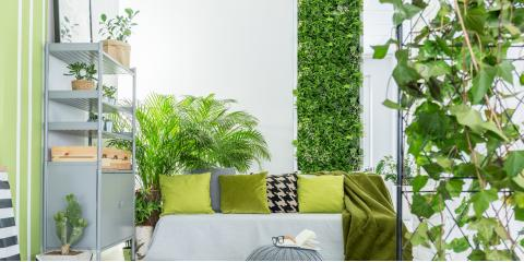 What Are the Signs Your Indoor Plants Need More Sun?, Anchorage, Alaska