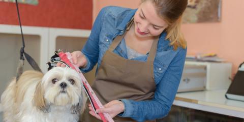 3 Dog Grooming Tips for New Owners, Lincoln, Nebraska