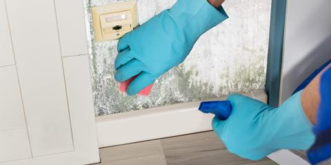 Top Mistakes Made During Do-It-Yourself Mildew & Mold Remediation, Rochester, Minnesota