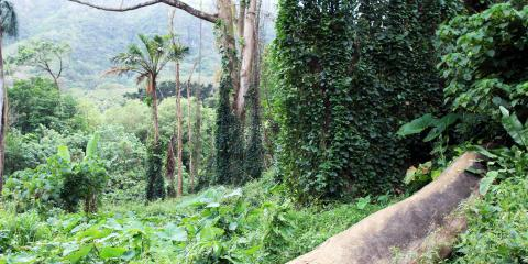 3 Perfect Places to Hike on Oahu, Honolulu, Hawaii