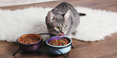 Local Pet Hospital Shares 5 Tips for Animals to Maintain a Healthy Weight, Covington, Kentucky