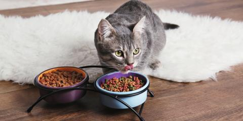 3 Tips for Helping Your Pet Lose Weight in the New Year, Wahiawa, Hawaii