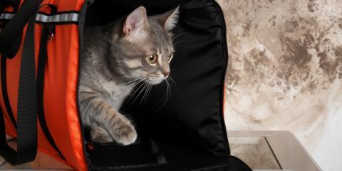 5 Simple Ways to Improve a Cat's Veterinarian Visits, Covington, Kentucky