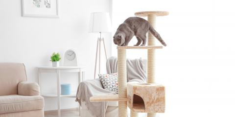 5 Reasons Why Cats Like High Places, ,