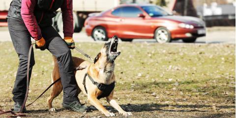 Personal Injury Attorney Explains How to Avoid Dog Bites, Lake St. Louis, Missouri