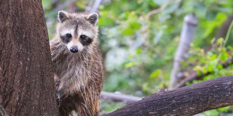 How to Keep Local Wildlife Away From Your Pool, New Milford, Connecticut
