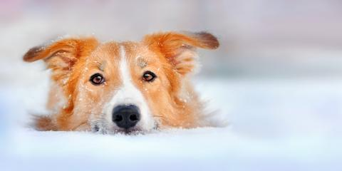 How to Protect Your Dog from the Cold, Norwood, Ohio