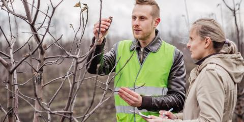 3 Tips for Preparing Your Trees for Spring, Sparta, Georgia
