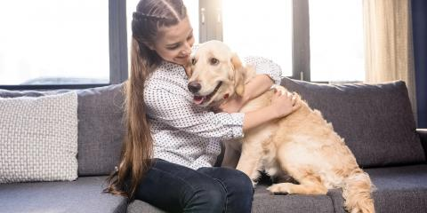 3 Reasons to Use Care Credit® for Pet Health Care, Amsterdam, Virginia