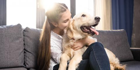 How Pets Affect Your Cooling & Heating System, Somerset, Kentucky