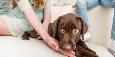 The Do's & Don'ts of Surviving Your Puppy's Teething Phase, San Marcos, Texas