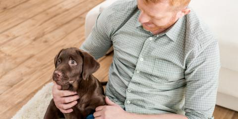 Best Flooring Installation Options for Pet Owners, Foley, Alabama