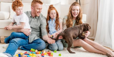 Pet Stain Removal Pros Explain How to Neutralize Animal Odors, Penfield, New York