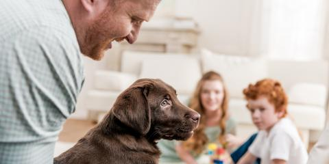 The Top 3 Ways to Pet-Proof Your HVAC System, Wentzville, Missouri