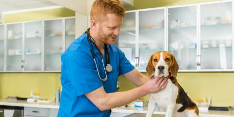 A Guide to Pet Vaccinations for Dog Boarding, Honolulu, Hawaii