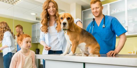How Often Should You Take Your Pet to the Veterinarian? , Rosenberg-Richmond, Texas