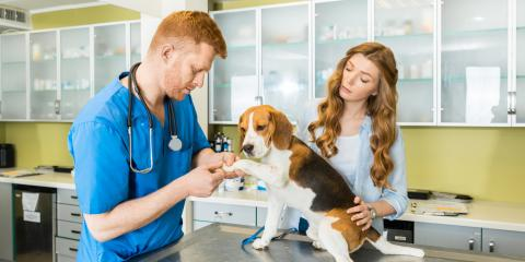 How to Choose the Right Veterinarian, Mineral Springs, North Carolina