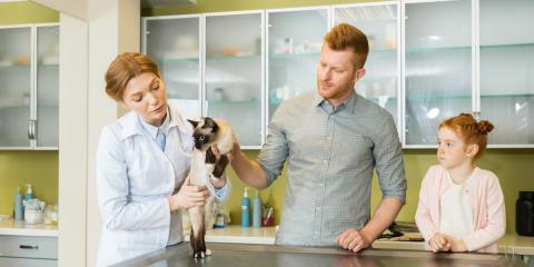 3 Questions to Ask When Looking For a New Veterinarian, York, Arkansas