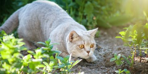 Why a Cat Isn't an Effective Pest Control Method , Las Vegas, Nevada