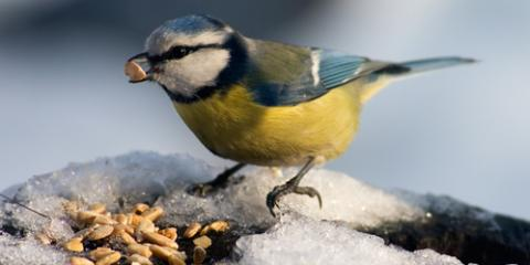 Garden Center Experts Recommend Methods for Winter Bird Feeding, Quaker City, Ohio