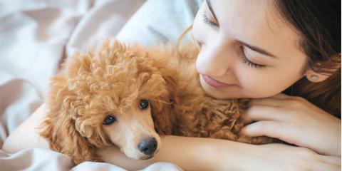 Wahiawa Veterinarian Shares 3 Foods to Keep Away from Your Pets, Wahiawa, Hawaii