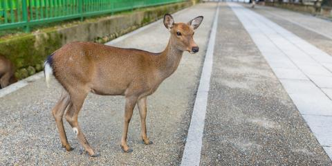 What You Should Do if You Hit a Deer, Thomasville, North Carolina