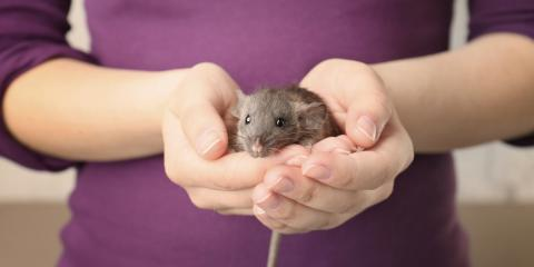 Fumigation Pros on Humane Ways toGet Rid of Mice& Rats, Wailuku, Hawaii