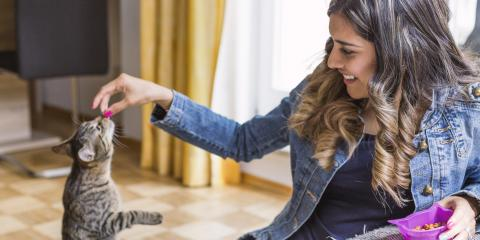 Tips to Hire a Great Pet Sitter , Miami, Ohio