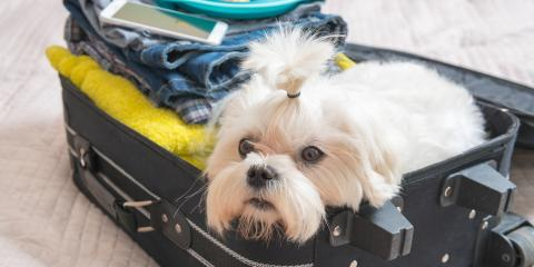 Commonly Asked Questions About Dog Boarding, Highland Village, Texas