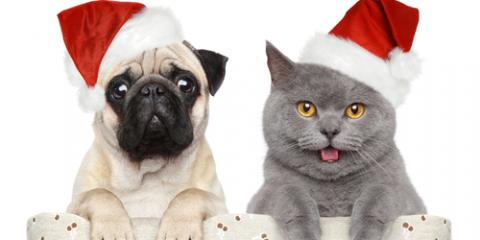 3 Foods to Keep Your Pet Away From During the Holidays, Statesboro, Georgia