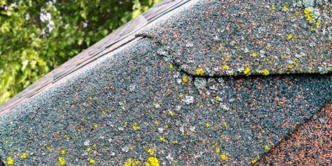 Why Do Algae & Moss Grow on Roofs?, ,