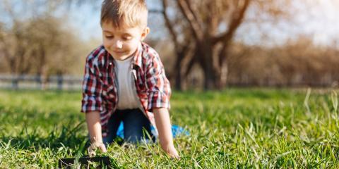 3 Popular Types of Warm Weather Grasses, Koolaupoko, Hawaii
