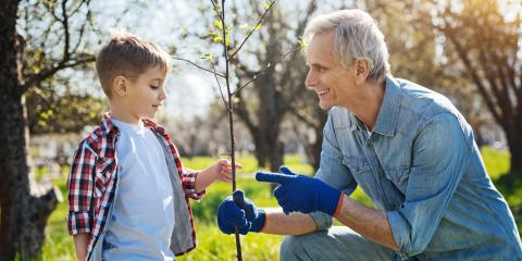 3 Benefits of Planting Trees in the Fall, Macedon, New York