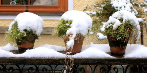 3 Tips for Protecting Your Potted Plants This Winter, Ham Lake, Minnesota