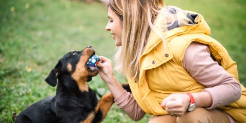 4 Items to Bring When Boarding Your Dog, McKinney, Texas