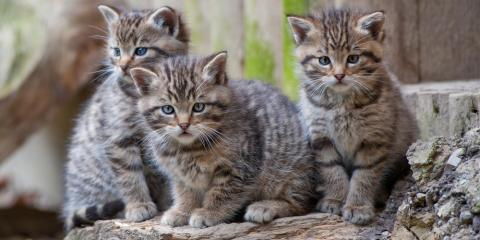 Pet Care Services Explain How to Take Care of Ferals in Winter, Clarksville, Maryland
