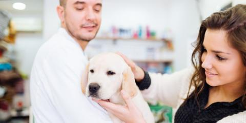 The Do's and Don'ts of Bringing Your Pet to the Veterinarian, Honolulu, Hawaii