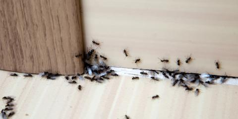 Pest Control Pros: 5 Critters Commonly Seen in Summer, Lodi, California