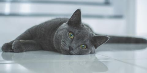 3 Tips for National Cat Health Month, Columbia, Missouri