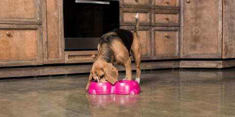 4 Human Foods You Can Share With Your Dog, Florence, Kentucky
