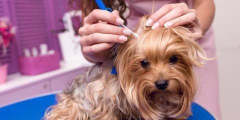 4 FAQ About Grooming Yorkshire Terriers, Fairbanks North Star, Alaska