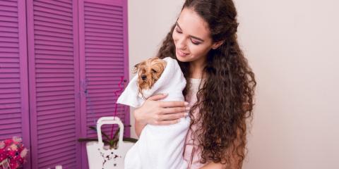 How to Teach Your Dog to Love Bath Time, Enterprise, Alabama